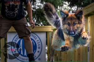 Southtown K9 / NADD Trials