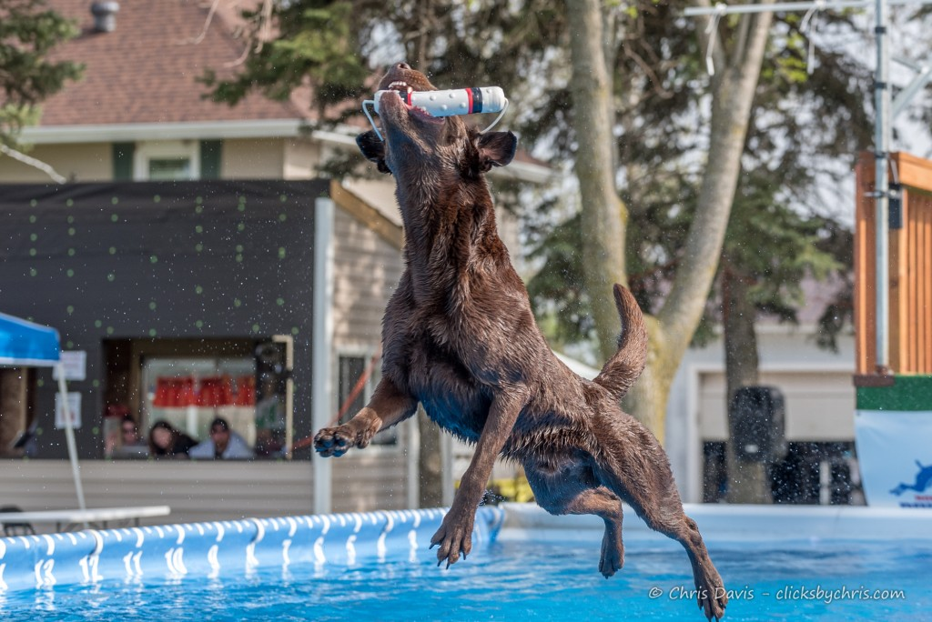 NADD / AKC Trial at the Southtown K9 in Rock Falls, Illinois, on Saturday, May 2, 2015 at 16:42:56. Frame: 5918 - (© Chris Davis - clicksbychris.com)