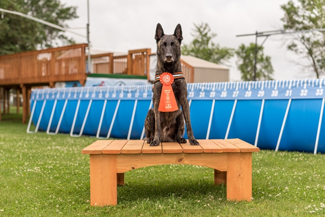NADD / AKC Trial at the Southtown K9 in Rock Falls, Illinois, on Sunday, June 14, 2015 at 10:40:33. Frame: 3031 - (© Chris Davis - clicksbychris.com)