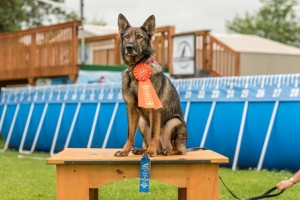 NADD / AKC Trial at the Southtown K9 in Rock Falls, Illinois, on Saturday, July 11, 2015 at 14:44:37. Frame: 6166 - (© Chris Davis - clicksbychris.com)