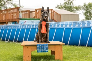 NADD / AKC Trial at the Southtown K9 in Rock Falls, Illinois, on Sunday, July 12, 2015 at 14:37:44. Frame: 6594 - (© Chris Davis - clicksbychris.com)