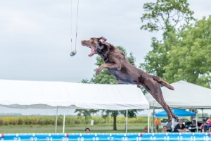 NADD / AKC Trial at the Southtown K9 in Rock Falls, Illinois, on Saturday, Sept. 5, 2015 at 15:15:26. Frame: 4589 - (© Chris Davis - clicksbychris.com)