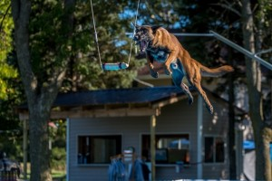 NADD / AKC Trial at the Southtown K9 in Rock Falls, Illinois, on Saturday, Sept. 19, 2015 at 16:05:34. Frame: 6850 - (© Chris Davis - clicksbychris.com)