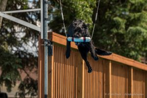Dock Diving Competition and UpDog Challenge - Southtown K9 - Saturday, June 4, 2016