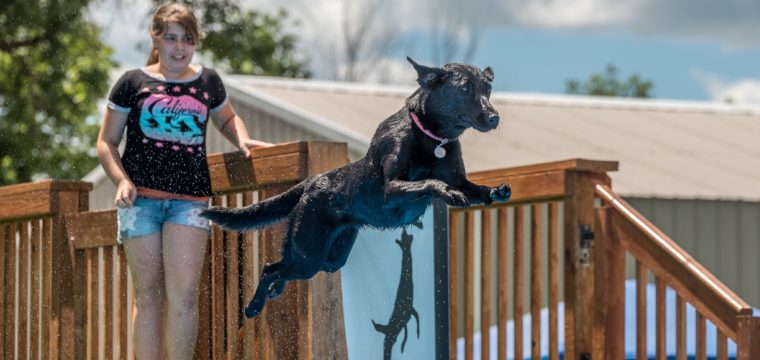 Southtown K9 Results for June 10-11, 2017